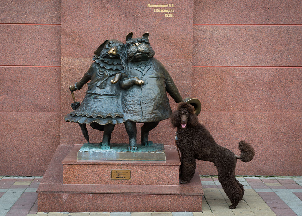 traveling-poodle-big-039.jpg